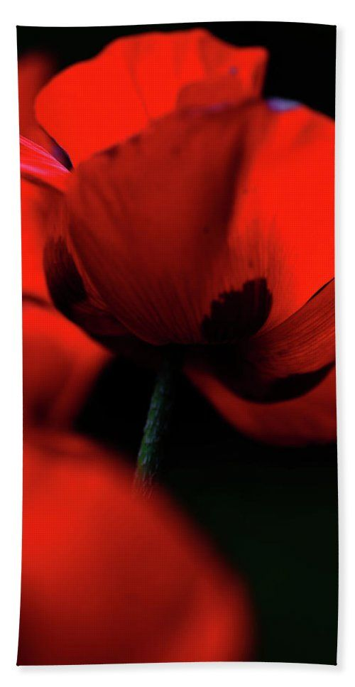 "Flaming Red Poppies Towel (Beach Towel (32"" x 64"")) by Jenny Rainbow.  Our towels are great."