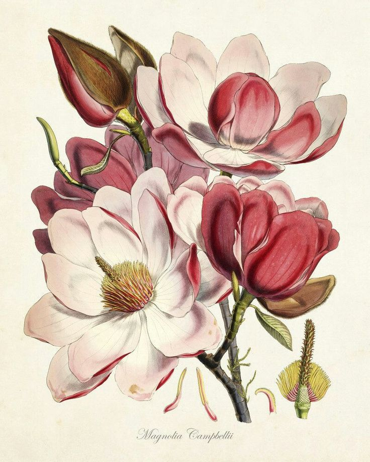 Картинки цветы красивые нарисованные, юбилеем лет