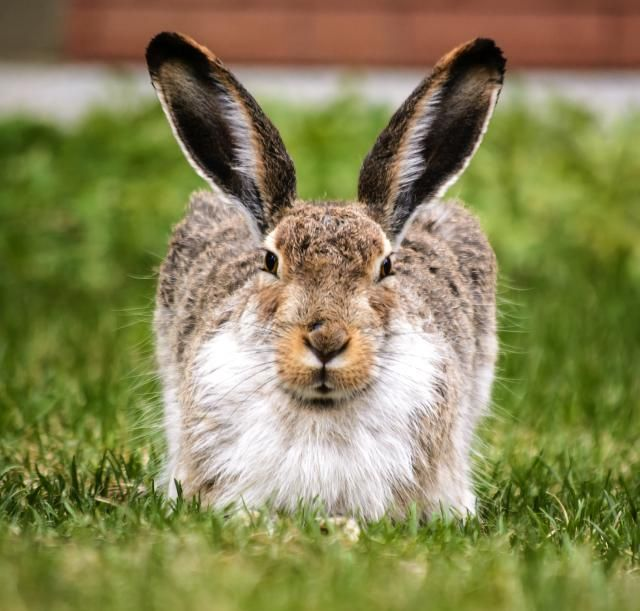 In the spring, rabbits are everywhere. Learn about why March hares really go mad, what's up with the egg-laying Easter bunny, and some ways to incorporate rabbit symbolism into your ritual and spellwork.