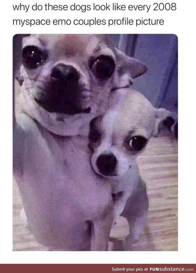 Cute Dog Couple Funsubstance Animal Memes Cute Dogs Funny Animals