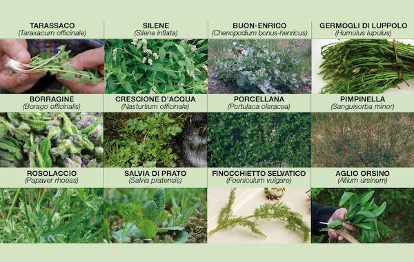 17 migliori immagini su verdure piante e fiori for Catalogo piante e fiori