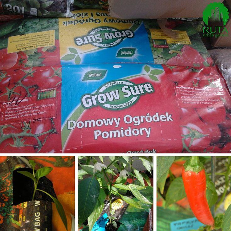 """Worki uprawowe - worek z ziemią, w którym robi się otwory i sadzi rośliny, jest to jednocześnie nasza """"doniczka"""" (growbag)"""