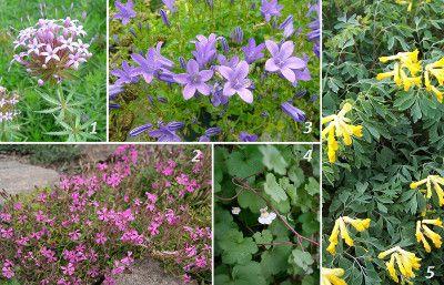 Kwiaty Na Skalniak Dlugo Kwitnace Plants