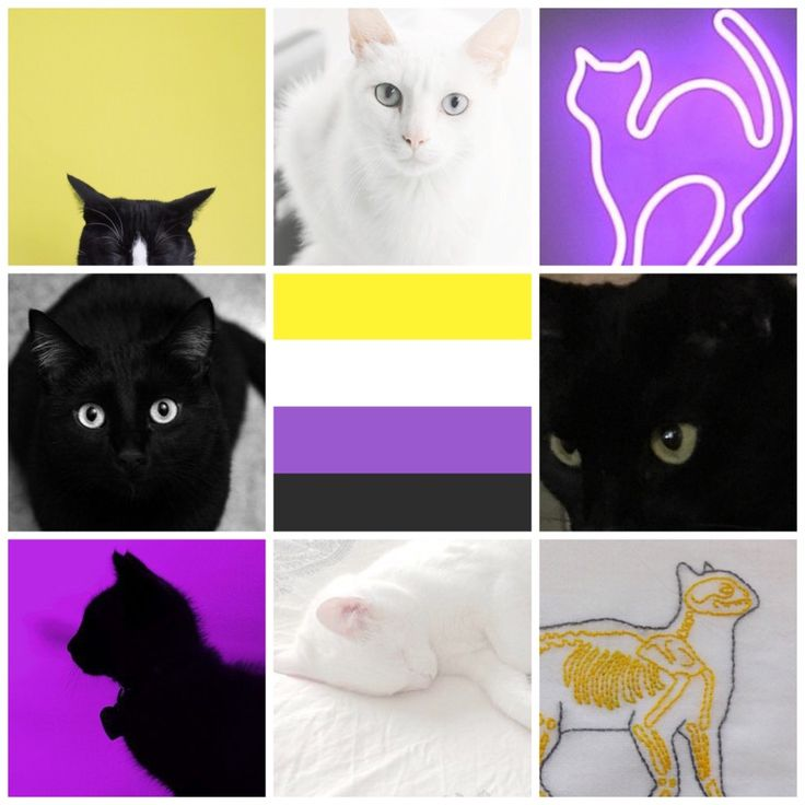 """nonbinary cats, ft. one of my kitties, iris"" by Queer Positive on Tumblr Pansexual Pride, Lgbt Memes, Genderqueer, Aesthetic Wallpapers, Saga, Lesbian, Aesthetics, Kitty, Positivity"