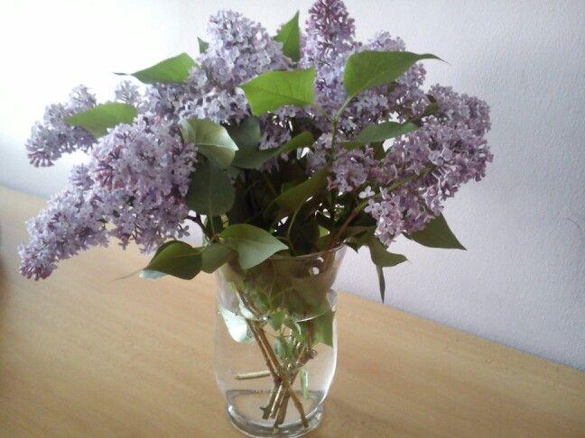 Všem maminkám posílam teto nadherný květ,který miluji. Maminku už nemám :| a tak ho posílam všem milujícím m...... <3