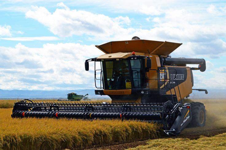 Cat Lexion harvesting rice in Grimes, CA.