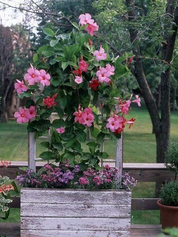 Make a Mock Window: Idea, Decks, Flowers Vines, Trellis, Plants, Old Window, Planters, Window Frames, Window Boxes