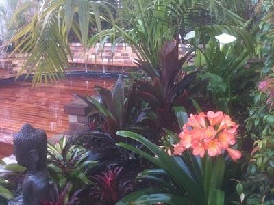 Tropical Garden Courtyard - Inner West Sydney. Kentia Palms, Cordylines, Bromeliads, Ajuga, Liriopes, Buddha. Hardwood Decking. Natural Tropical Garden.