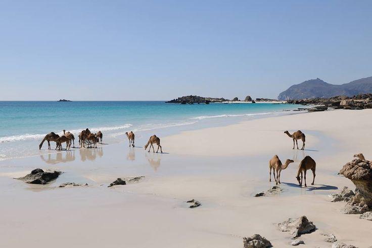 Baden in Salalah Oman http://www.kombireise.eu/oman  #salalah #baden_im_oman
