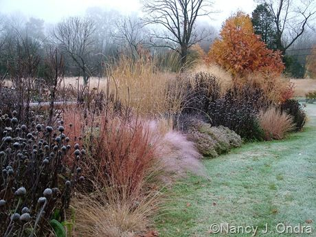 751 best images about landscaping on pinterest for Border grasses for landscaping