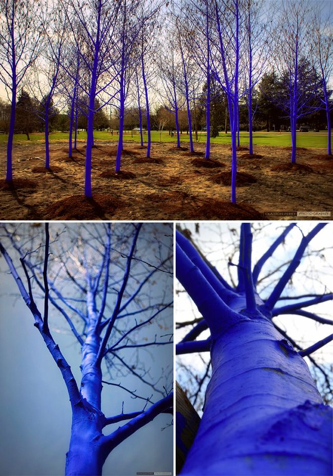 Created by artist Konstantin Dimopoulos, the vibrant trees are painted to bring attention to global deforestation and the importance of trees as our world's lungs. Dimopoulos used biologically-safe pigmented water that is completely biodegradable. The paint will slowly fade away, creating an evolving piece of art as the trees return to their natural forms.
