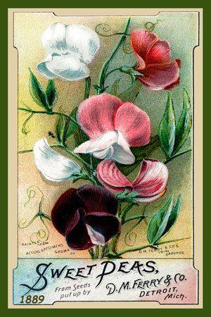 Olde America Antiques | Quilt Blocks | National Parks | Bozeman Montana : Flowers - Sweet Peas DM Ferry Co