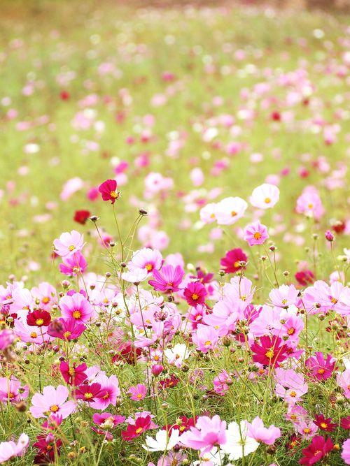 ♔ In the meadow - Schmuckkörbchen für Bienen