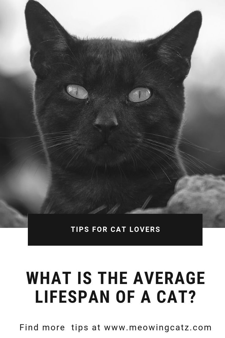 how long do cats live - 735×1102