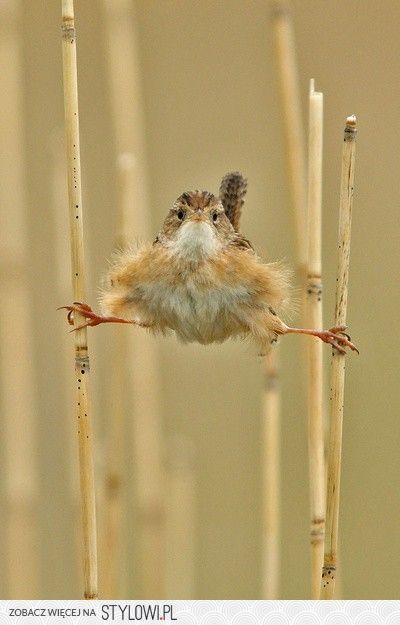 Hilarious, bird karate