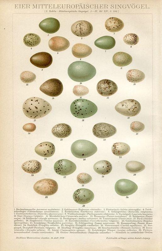 bird eggs print