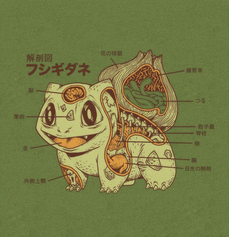 Bulbasaur Anatomy by RYE-BREAD.deviantart.com