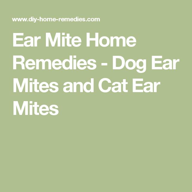Ear Mite Home Remedies - Dog Ear Mites and Cat Ear Mites
