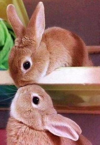 bunny nose kiss