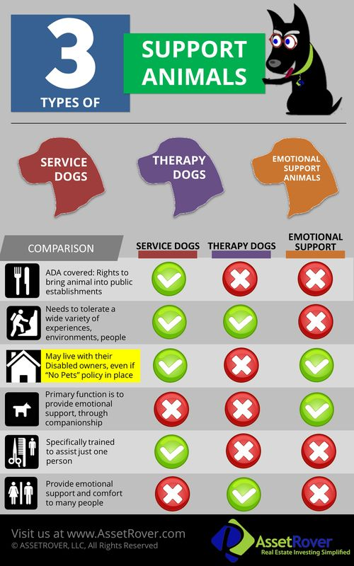 therapy dogs service dogs emotional support animals