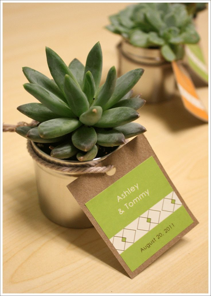 Succulent wedding favors---like the TY card attached