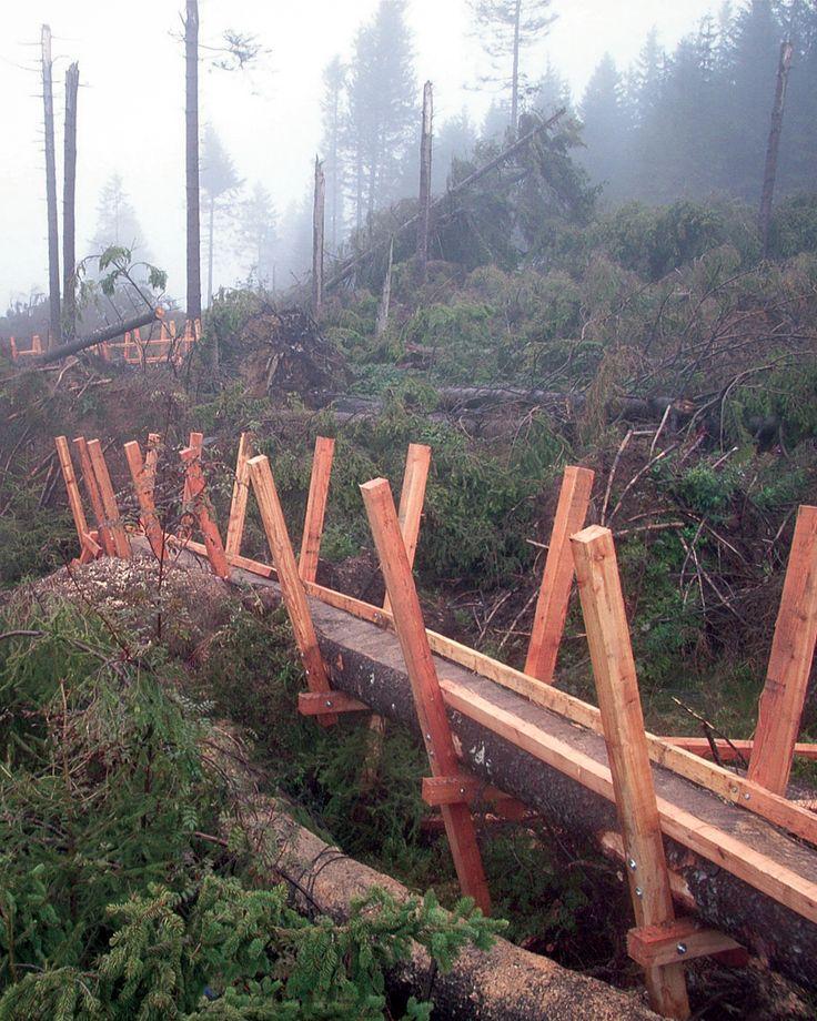 Der Orkan Kyrill zerstöre 2007 große Waldflächen - auch im Upland. Der #Kyrillpfad bei #Willingen ist ein Lehrpfad, der Wanderern und Familien die Sturmschäden näher bringt und zeigt, wie sich die Natur wieder erholt. |Foto: willingen.de