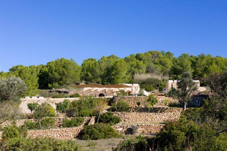 Террасы с оливковыми и другими деревьями. Реконструкция не нарушила гармоничного пейзажа. .