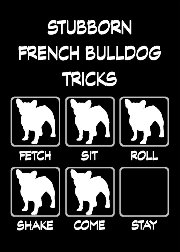 Stubborn French Bulldog Tricks, ha! If you have one, you KNOW this is true. ❤️