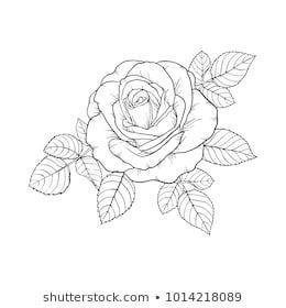 schöne Schwarzweiss-Rose und Blätter. Blumengesteck isoliert auf Hinterg …   – Blumen Tattoos