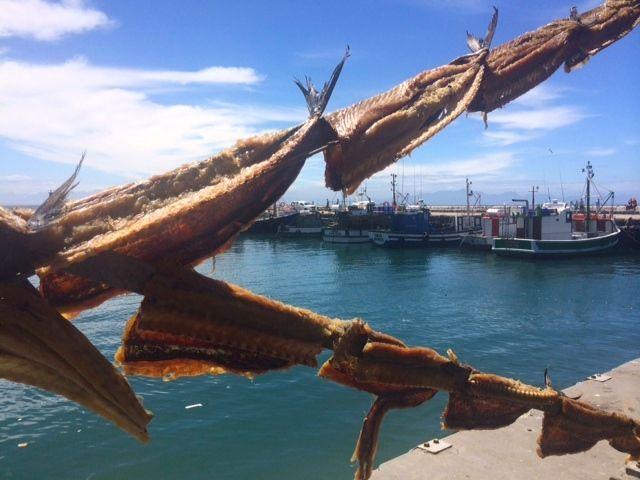 snoek drying in Kalk Bay harbour