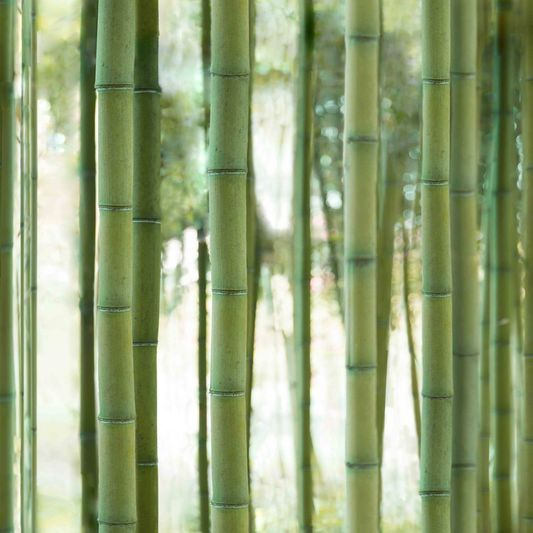 Bambou Forest Wallpaper