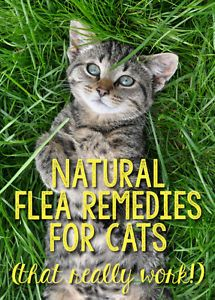 Prevention is the best medicine when it comes to fleas and your cat. It's far easier to prevent an infestation than to get rid of fleas once they've taken over your cat and your home! Sure, there are many...
