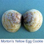 Seashell Identification | Shell ID | Identify Sanibel Shell | i Love Shelling