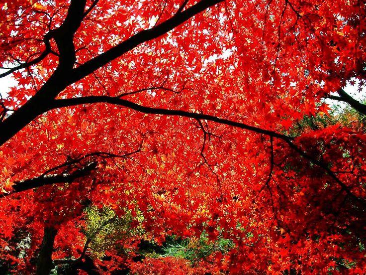 The Sacred Maple Tree. ~ Melanie Spencer {Poem}   elephant journal