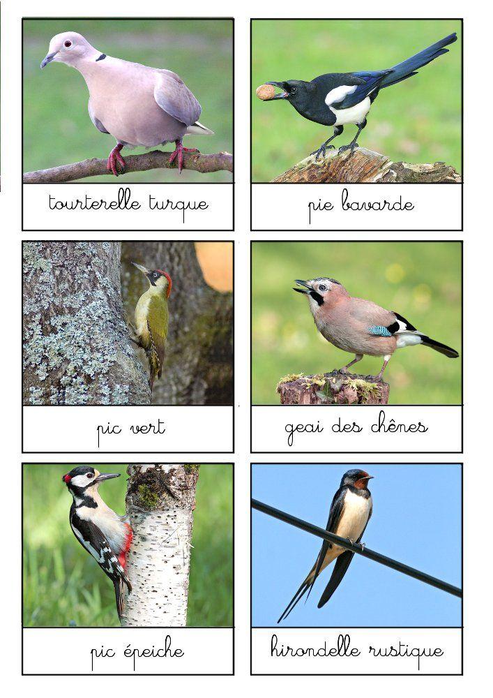 cartes-oiseaux-jardins-bois