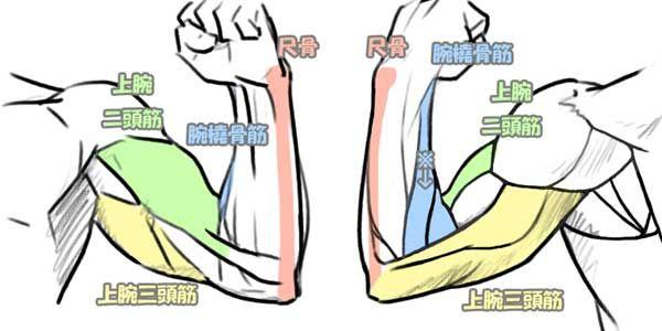 「腕 筋肉 名」の画像検索結果