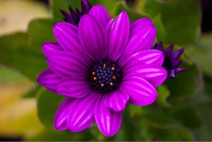 Best 25 Purple Wallpaper Ideas On Pinterest: 25+ Best Ideas About 3d Nature Wallpaper On Pinterest