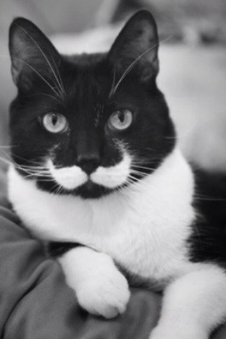 @Abby Suhre This is Emily-cat. :) mustachecats mustache moustache mustaches