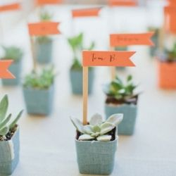 Potted succulents as escort seating plan, cute favour idea as well