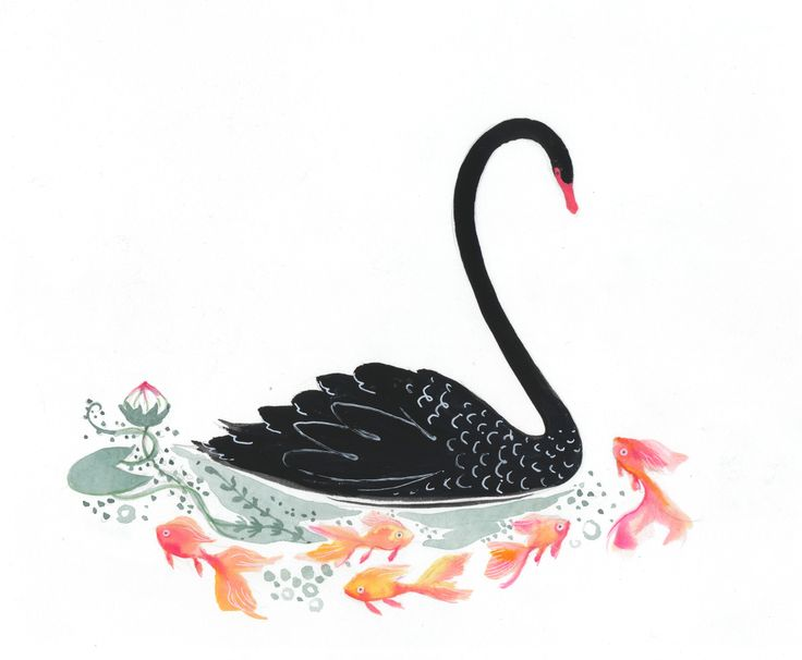 black swan with goldfish watercolor and gouache
