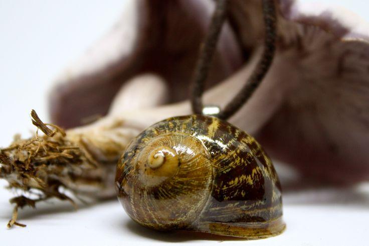 bottled earth — Slowly snail