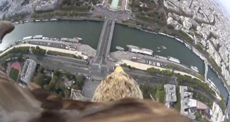 Ο πύργος του Άιφελ, ένας αετός και τεχνολογία  http://www.imonline.gr/gr/tehnologia/o-purgos-tou-aifel-enas-aetos-kai-texnologia-925