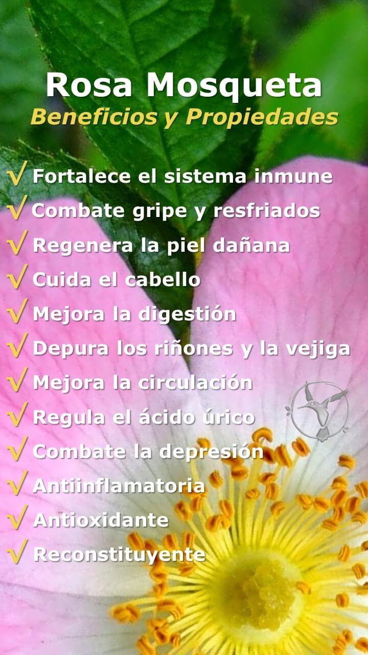 #salud #mujer #rosa #mosqueta #beneficios #flor #propiedades #acne #aceite #cabello #color #cicatriz #estrías #manchas #pelo #planta #usos