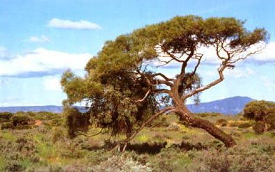 Australian Arid Lands Botanic Garden, Port Augusta, South Australia.