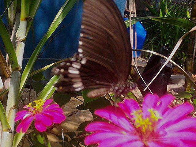 Gambar Bunga Dahlia Bergerak Koleksi Galeri Pernik Dunia Yang Berisi Gambar Pemandangan Alam Gambar Pemandangan Indah Seperti Burung Bunga Hewan Plants Bunga