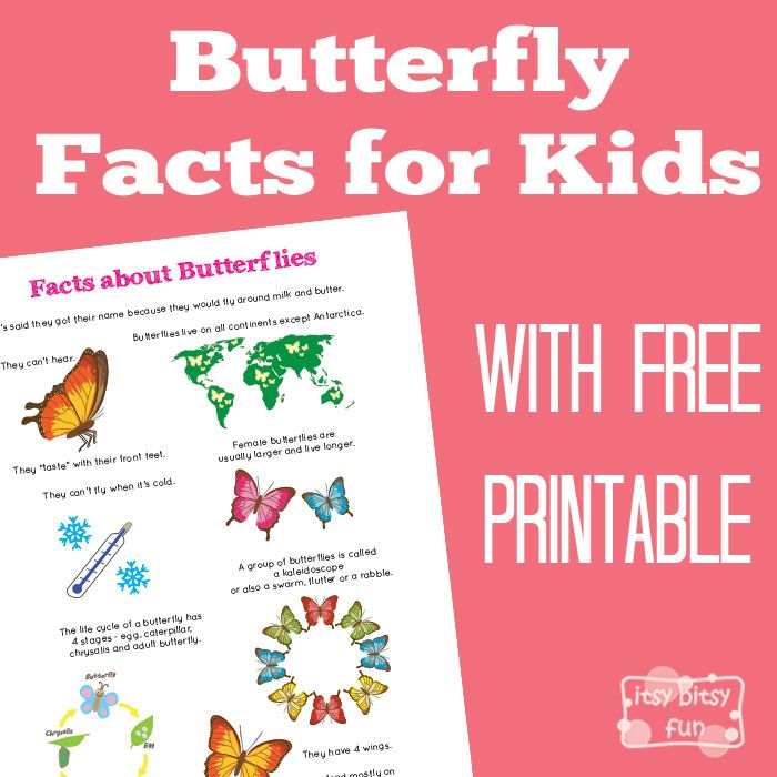 FREE--Butterfly Facts for Kids 've also created life cycle of a butterfly worksheets which will make a nice addition to this printable. There are also quite a few other fun facts for kids printables available on my site (hint hint your kids can create their own fact book).