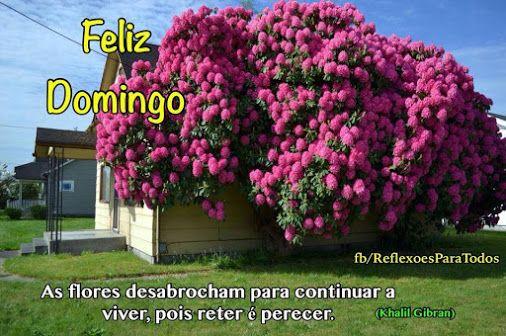 Feliz Sabado Bom Dia Clique Na Imagem E Encontre Lindas: 17 Best Images About Feliz Domingo On Pinterest