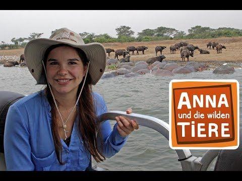 Ein Fluss Voller Flusspferde Doku Reportage Fur Kinder Anna Und Die Wilden Tiere Youtube Wilde Tiere Flusspferd Tiere