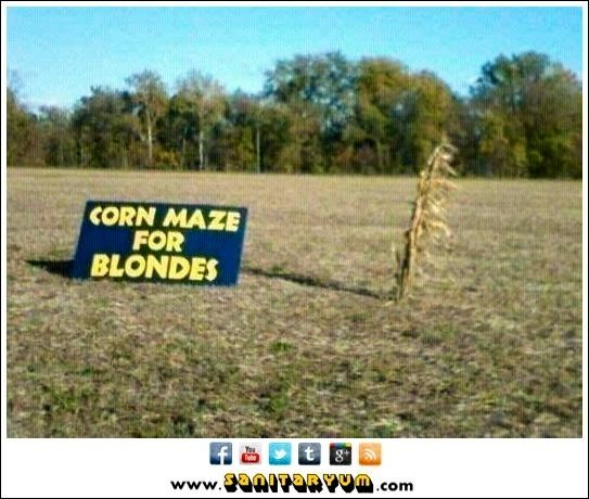 Corn maze for blondes | Funny Pictures | Pinterest | Corn ...