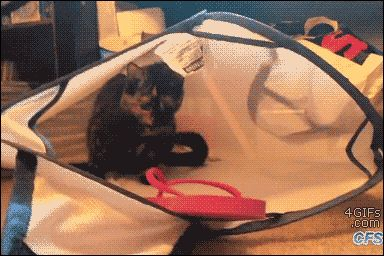 A cat regrets attacking a sandal inside a laundry bag